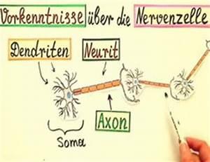 Halbwertszeit Berechnen Formel : video erregungs bertragung an den synapsen eine erkl rung ~ Themetempest.com Abrechnung
