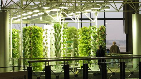 Aeroponic Gardening & Growing Systems