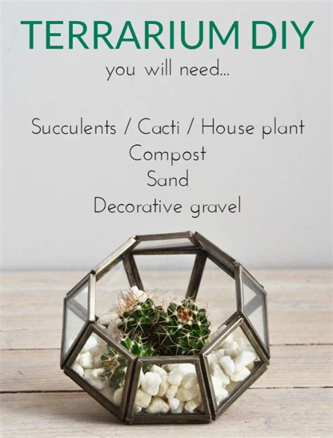 what you need for a terrarium how to make a terrarium decorator s notebook
