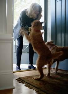 dog behavior problems greeting behavior door charging With should i get a dog door
