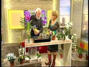 Orchidee Vanda Pflege : 26 orchideen richtig pflegen gie en und behandeln die ~ Lizthompson.info Haus und Dekorationen