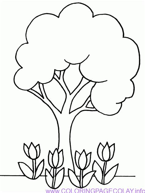 Coloring Outlines by Best Coloring Simple Pine Tree Outline Picture Hd Hd