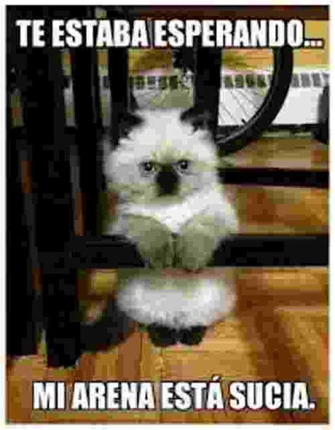 Memes De Gatos - los mejores memes chistosos en espa 241 ol 2016 memes de risa chistosos divertidos y graciosos