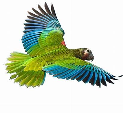 Parrot Burung Bird Flying App Ekogeo Suara