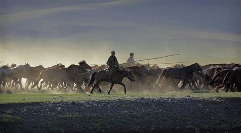 mongolian herd timothy allen nomadic horses photograph horse 20th january which uploaded