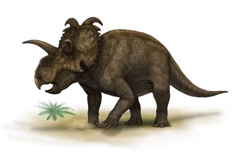 albertaceratops pictures facts dinosaur