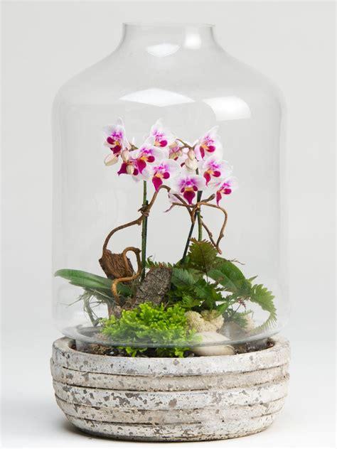 Mini Terrarium Glas by Mini Orchid Terrarium Planter Container Gardening