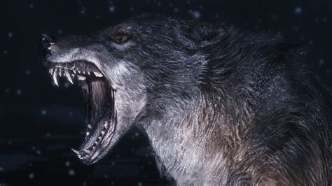 Angry Lone Wolf Wallpaper by Angry Wolf Wallpapers Hd Wallpaper Cave
