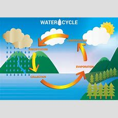 Water Cycle Diagram Vector  Download Free Vector Art, Stock Graphics & Images