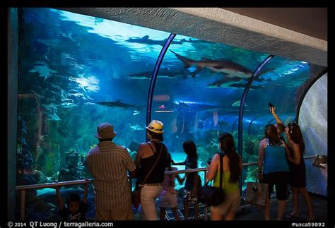 Picture Photo Visitors Looking Through Shark Tunnel