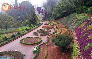 honeymoon tours india With honeymoon packages for ooty