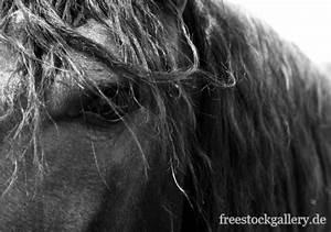 Pferdekopf Schwarz Weiß : pferdekopf m hne und augen schwarz wei pferdebild zum ~ Watch28wear.com Haus und Dekorationen