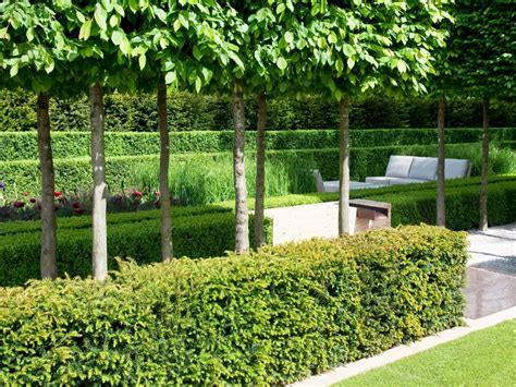 hedge gardens plant a formal hedge hgtv