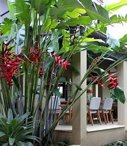 Plant Profile in Landscape outlook Magazine - Garden