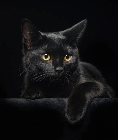 bringen schwarze katzen bilder wirklich pech tiermagazin