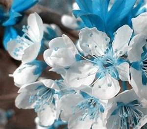 Sakura Baum Kaufen : blau zimmer kunstpflanzen und weitere wohnaccessoires g nstig online kaufen bei m bel ~ Frokenaadalensverden.com Haus und Dekorationen