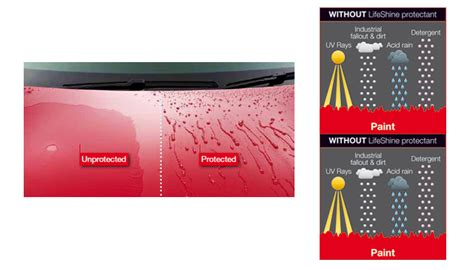 Paintwork Protection| Carvalet