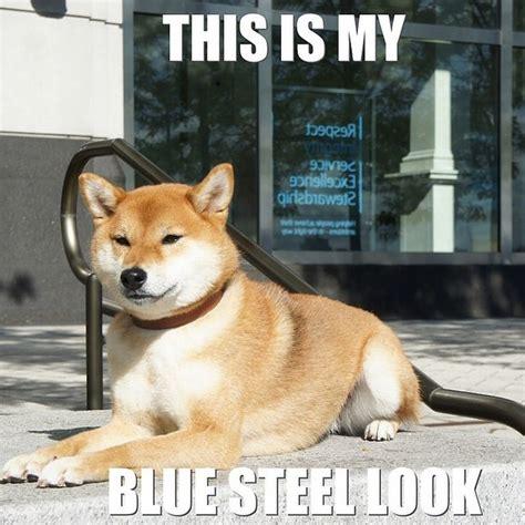 Shiba Inu Meme - shiba inus meme 28 images shiba inus are weird dogs thechive shiba inu meme google search