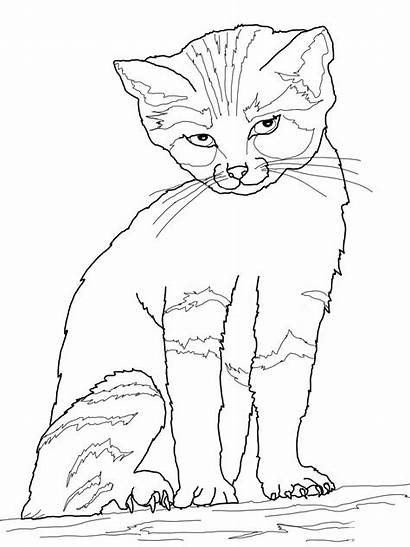 Coloring Cat Calico Last Pages Printable Getcolorings