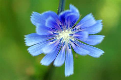 Blau. Foto & Bild   pflanzen, pilze & flechten, blüten ...