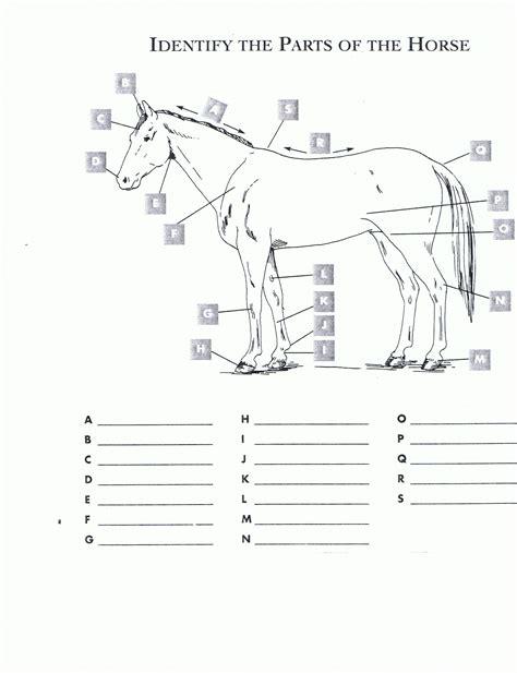 horseanatomyjpg  horseback riding lessons