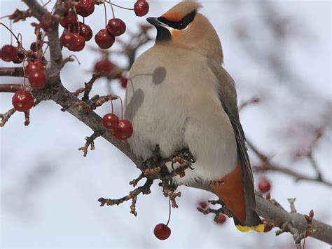 best 28 how do birds find food in the winter how to