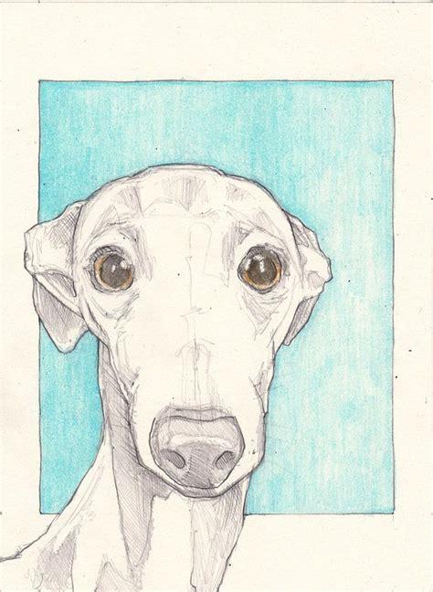 "foto de Italian greyhound drawing an original 7 5""x5 5"" sketch"