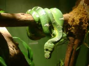 Amazon Rainforest Animals Boa