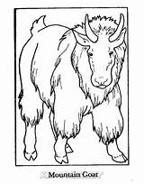 Coloring Goat Mountain Animals Sheet sketch template