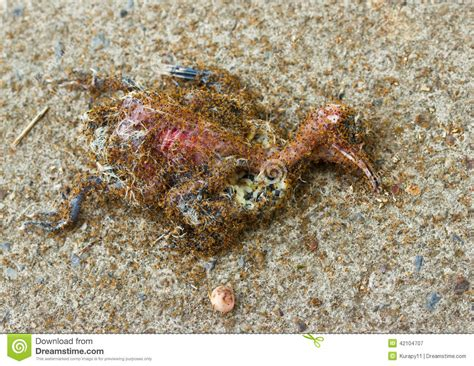 ants eating a dead bird stock photo image 42104707