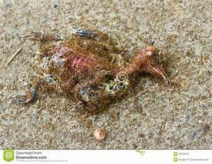 Was Essen Ameisen : ameisen die einen toten vogel essen stockfoto bild ~ Lizthompson.info Haus und Dekorationen