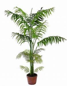 Palme Winterhart Kübel : areca palme 4st mmig 240cm k nstliche pflanzen ~ Michelbontemps.com Haus und Dekorationen