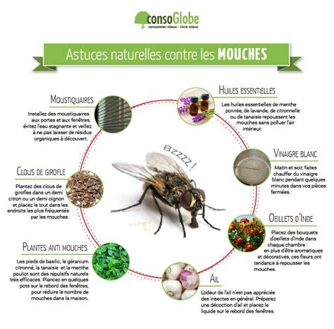 produit contre les moucherons cuisine astuces naturelles pour repousser les mouches le