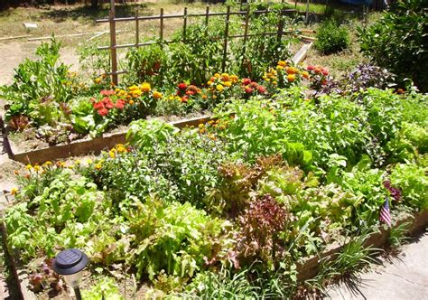 diy raised bed backyard vegetable garden with various