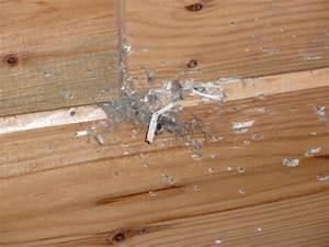 Maus Im Haus Was Tun : m usejagd oder eine maus im haus was tun seite 2 grillforum und bbq www ~ Orissabook.com Haus und Dekorationen