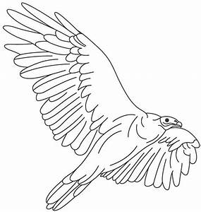 condor paint Colouring Pages