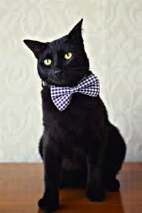 cat tie beautiful bow ties for curious cats styletails