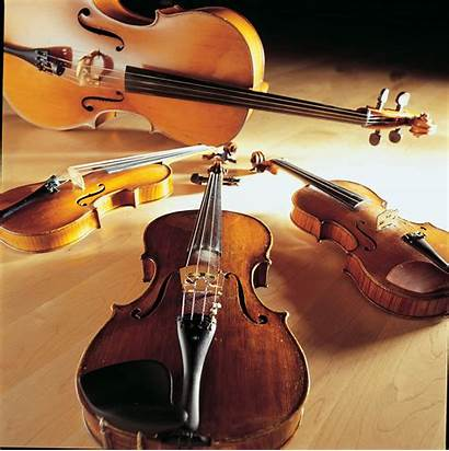 Quartet String Graduate Park Quartets Hyde Zinnia