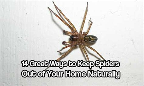 Keep Spiders Out Of Your Home Naturally  Shtf & Prepping Central
