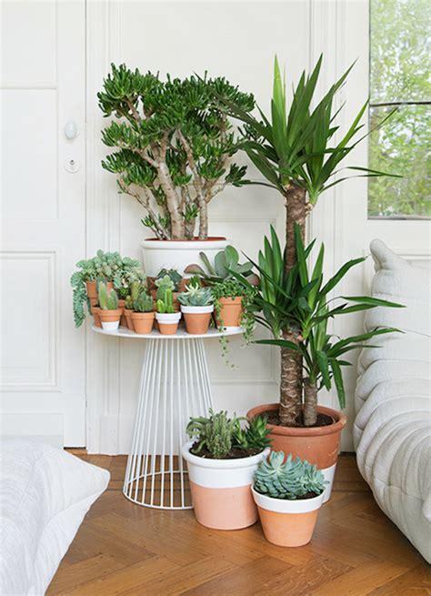 plantes dépolluantes chambre à coucher des plantes dans la chambre une bonne idée enfant
