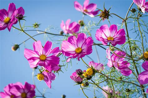 Die Fensterbank Mehr Als Eine Abstellflaeche Fuer Blumen by Einj 228 Hrige Sommerblumen Vorziehen F 252 R Mehr Wow Im Garten