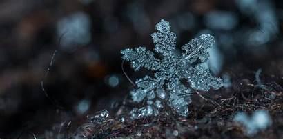 Snowflake Winter Macro Snow Neve Bokeh Frozen