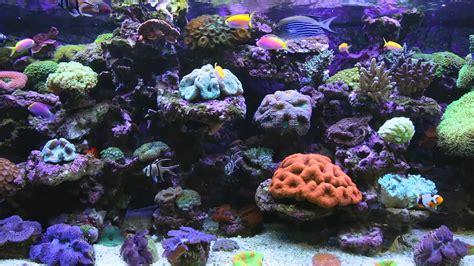 Animated Fish Tank Wallpaper Free - animated aquarium desktop wallpaper 53 images