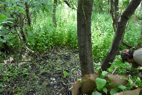 Managing Exotic Invasive Species In Ontario's Hardwood