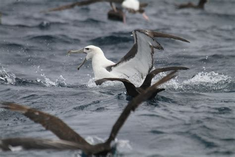 pelagic birding in cape town hooked on africa fishing