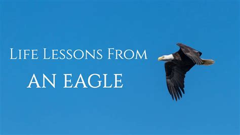 life lessons   eagle leadership lessons