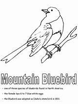 Coloring State Nevada Bluebird Pages Birds Missouri Symbols Bird Mountain Sheets Idaho Printable Bluebirds Flag Printables York Mountains States Worksheet sketch template