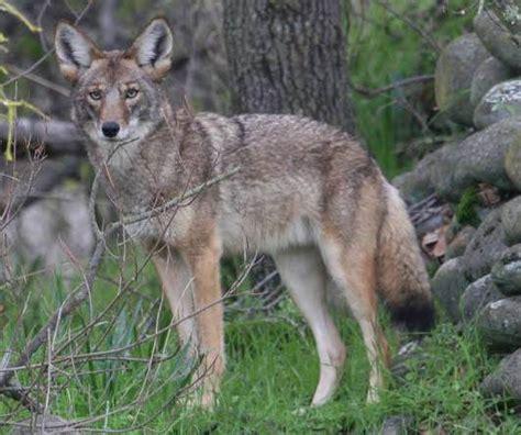 Wildlife Regulation Changes