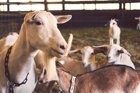 Farmer's Livestock & Small Animal Market Auction | Hay ...