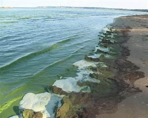 Algae Blooms Threaten Lake Erie - The New York Times